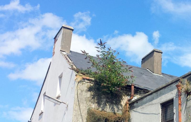 Queens Parade, Bangor, Down, BT20 3BH Roofers Builders Ceiling Repair Belfast Holywood Helens Bay