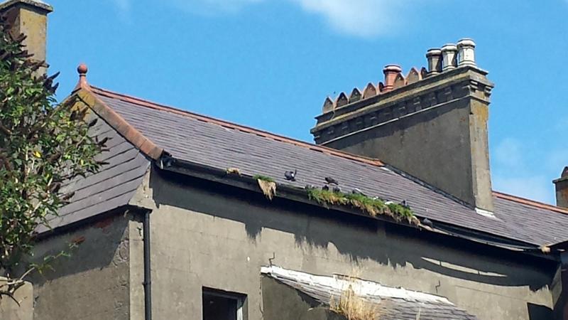 Roofers Builders Ceiling Repairs Belfast Newtownards Holywood Helens Bay