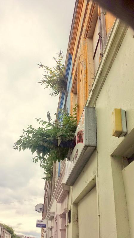 KING STREET, BANGOR BT20 3AH Holywood Helens Bay Belfast Roofers Builders  Ceilings